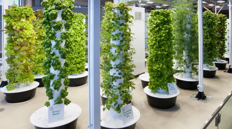 food fresh garden farm cities human hydroponic grows for habitat impact